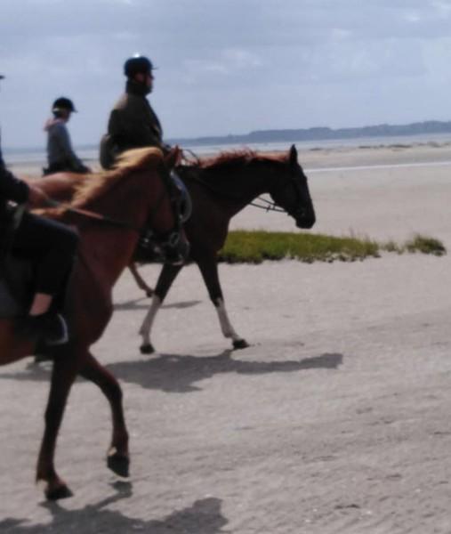 Balades équestres Abbeville